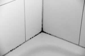 bathroom mold in shower