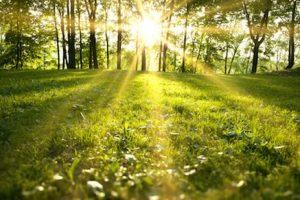 green meadow image