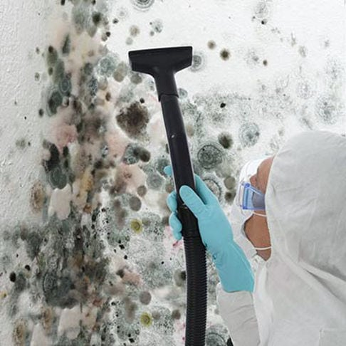 mold remediation specialist, black mold removal service