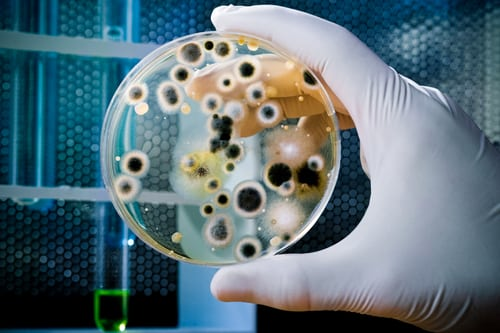 professional mold inspection may be needed when you suspect mold in your home or business