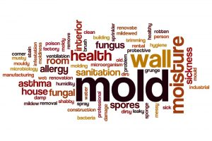 Black mold removal service and mold remediation specialist services by A&J Specialty Services Inc DKI of Madison, Middleton, Sun Prairie, Waunakee, Milwaukee, WI Dells, Fort Atkinson, Watertown, and Waukesha, Wisconsin