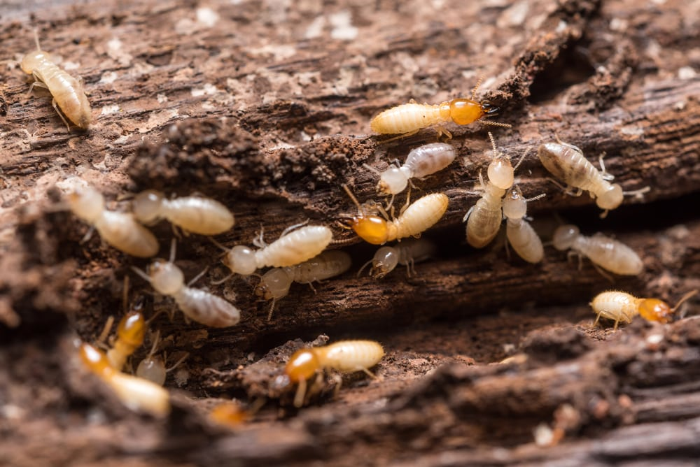 insects driven by moisture such as termites cause damage | services by A&J Property Restoration DKI of Madison, Middleton, Sun Prairie, Portage, Waunakee, Milwaukee, WI Dells, Fort Atkinson, Watertown, and Waukesha, Wisconsin