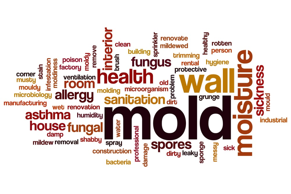 commercial building mold needs to be cleaned up immediately to prevent illness | services by A&J Property Restoration DKI of Madison, Middleton, Sun Prairie, Portage, Waunakee, Milwaukee, WI Dells, Fort Atkinson, Watertown, and Waukesha, Wisconsin