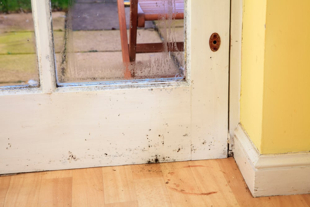 mold on wood door and baseboard