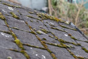 roof with moss growing between shingles