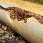 sewer damage can be caused by tree roots in the summer | A&J-Property-Restoration-DKI-water-fire-sewage-mold-services-home-business-Madison-Sun-Prairie-Portage-Milwaukee-WI-Dells-Fort-Atkinson-Watertown-Waukesha-Wisconsin