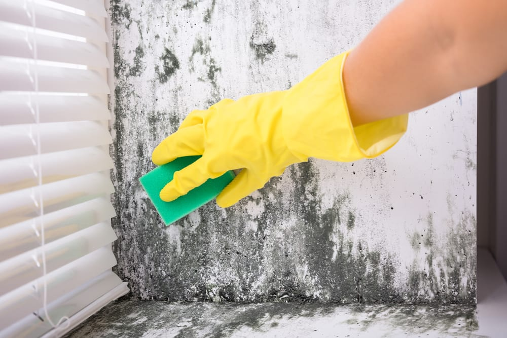 person wearing cleaning glove and sponge cleaning moldy wall
