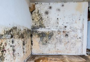 excessive mold on walls