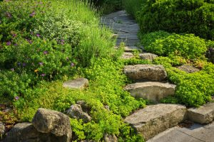 wisconsin rain garden with native green plants and shrubs and stone steps